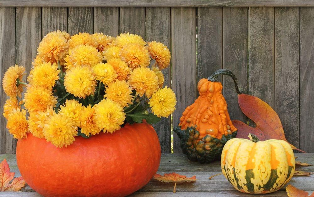 pumpkin-planter