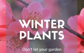 top 10 winter plants