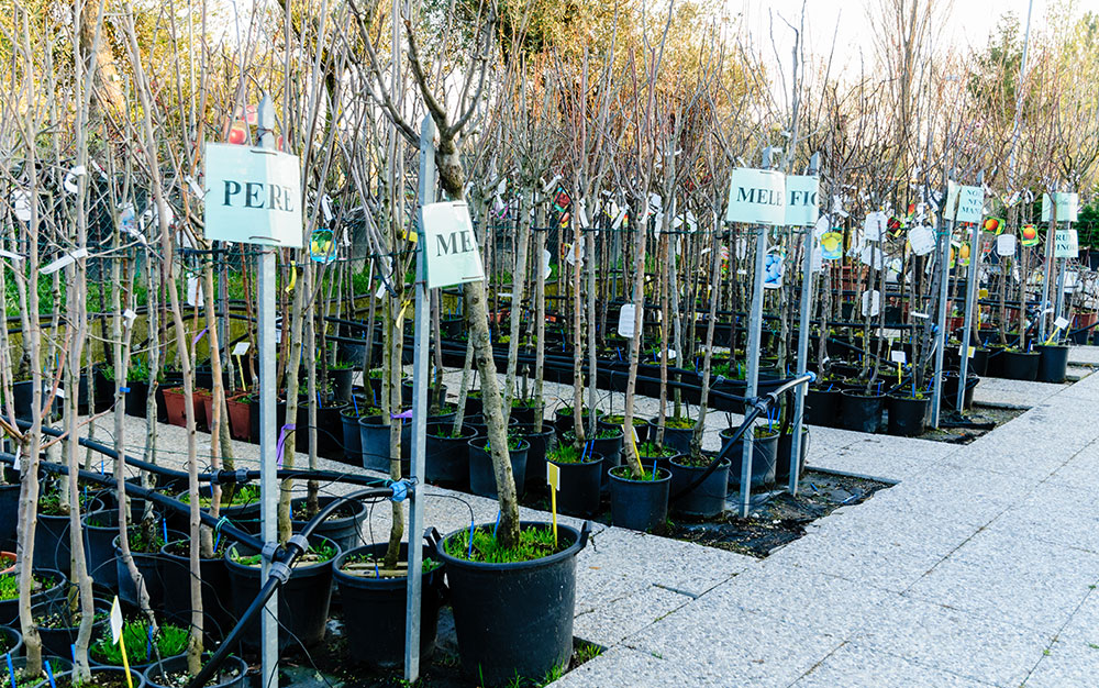 trees-garden-centre