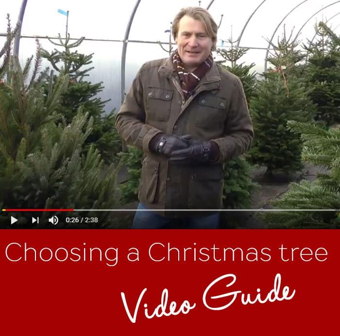 Choosing-tree-video