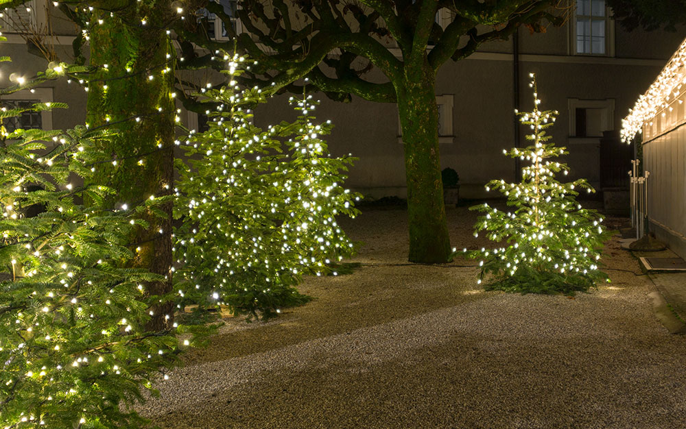 Best Outdoor Christmas Lights For Your Garden David Domoney