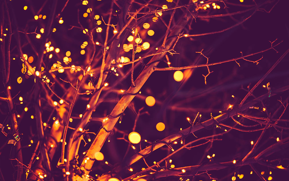 gold-lights-in-tree