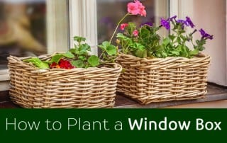 how-to-plant-a-window-box