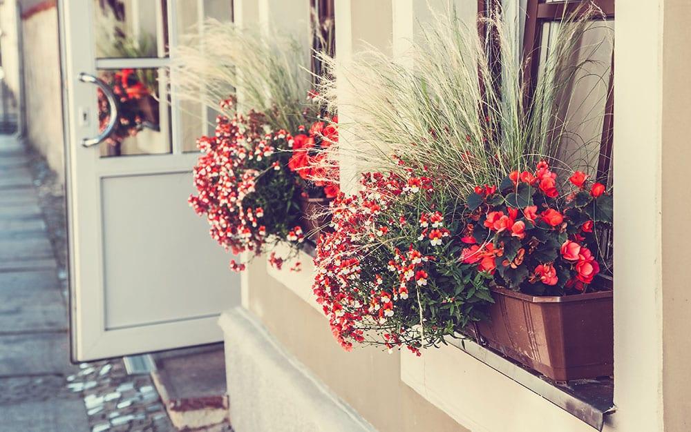red-flower-window-box-street