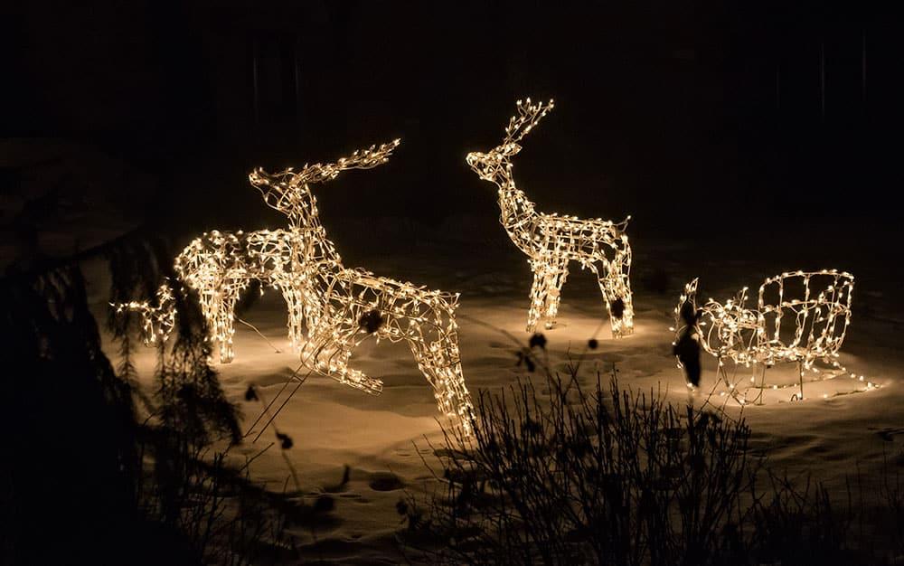 reindeer-snow-scene