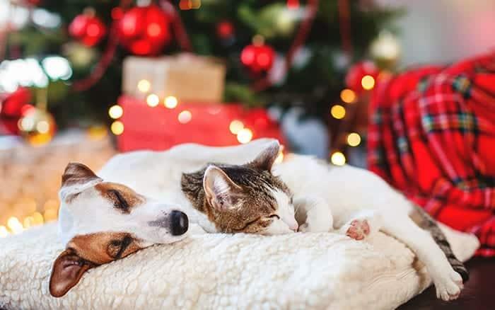 kitten-sleeping-dog