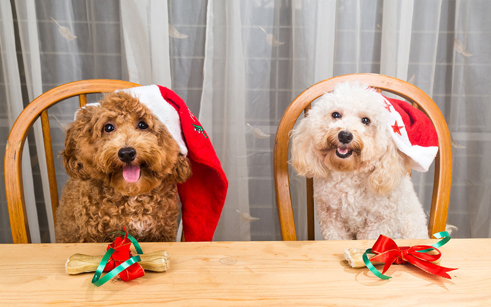 Style Icon of the Season: Cousin Eddie in Christmas ... |Christmas Vacation Dog Dinner