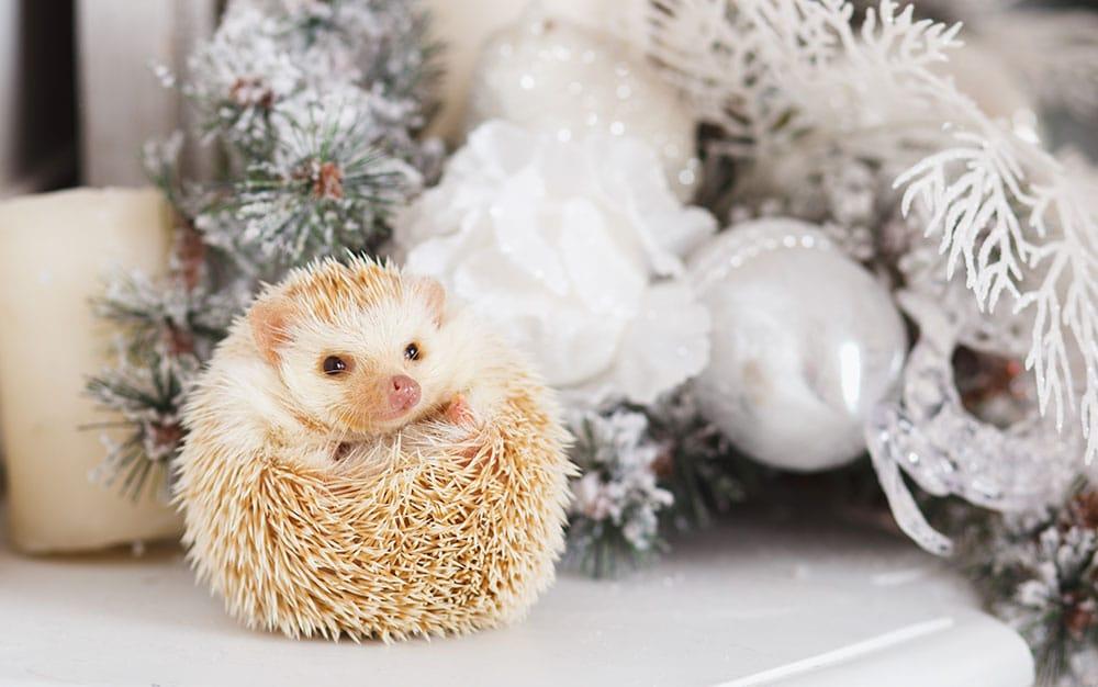 hedgehog-christmas