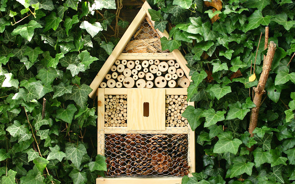 insect-hotel-ivy