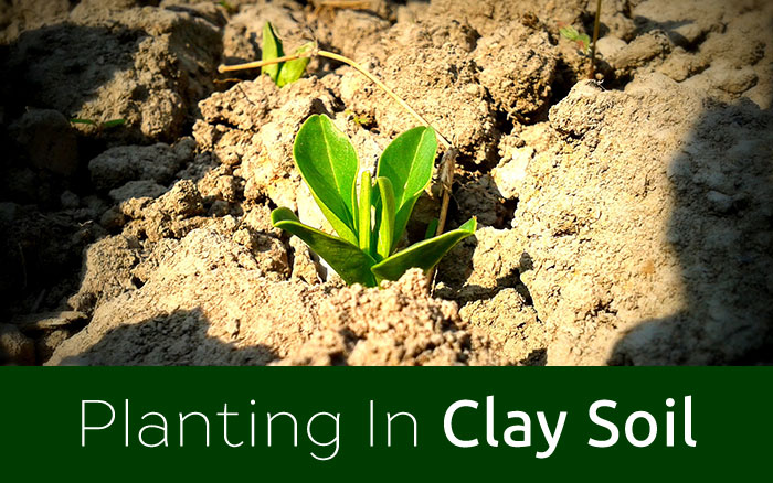 Gardening The Best Plants For Clay Soil Grow In Full Sun And Partial Shade David Domoney