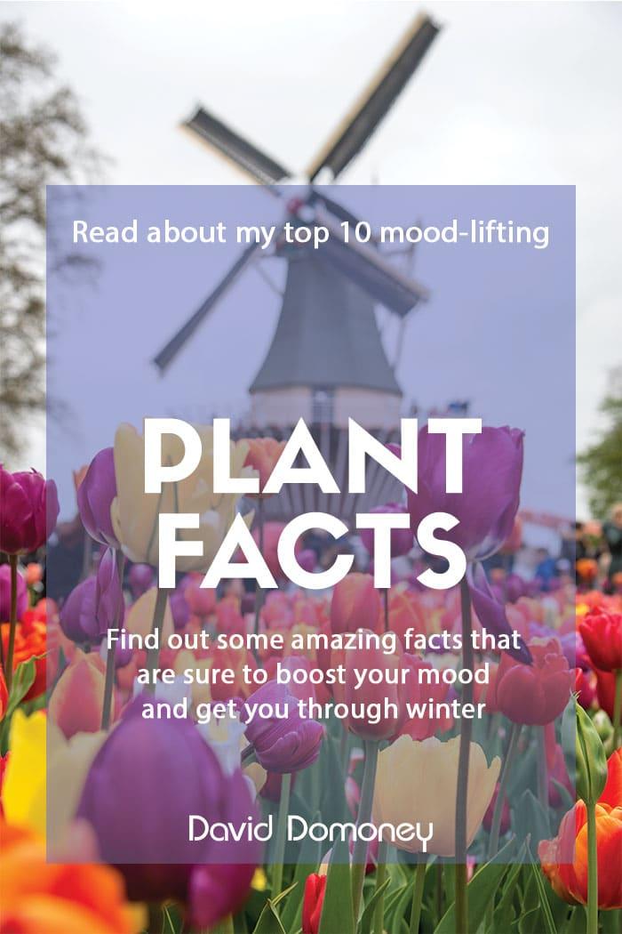 Mood-lifting plant facts