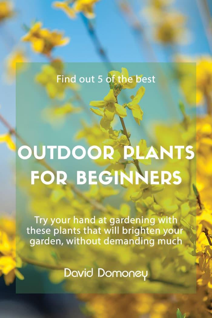 5 Best Easy To Grow Outdoor Plants For Beginner Gardeners