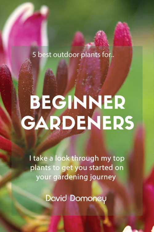 beginner gardeners