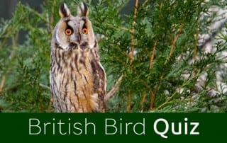 Take my British Bird quiz
