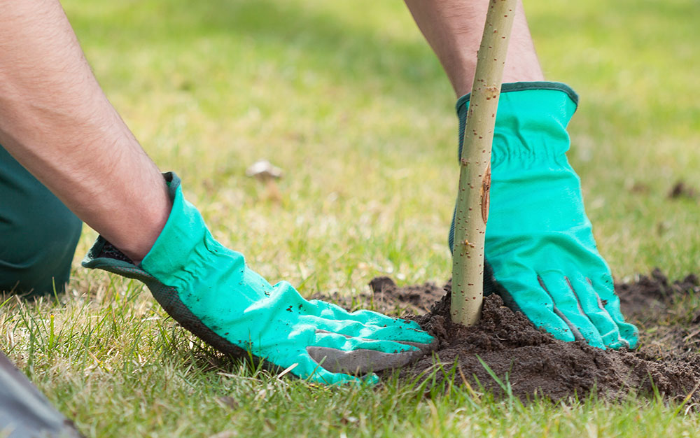 planting-tree-2
