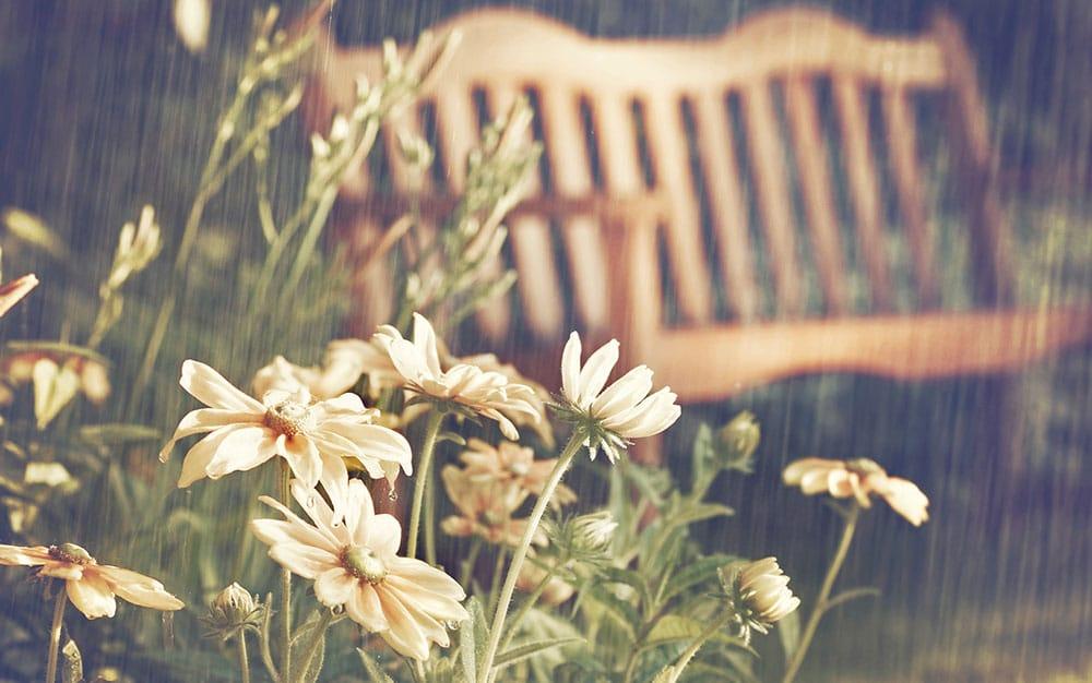rain-garden-bench