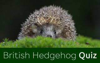Hedgehog Quiz