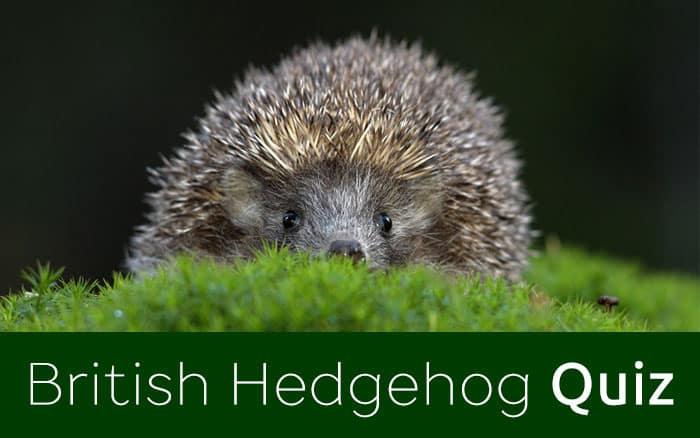 Hedgehog Quiz