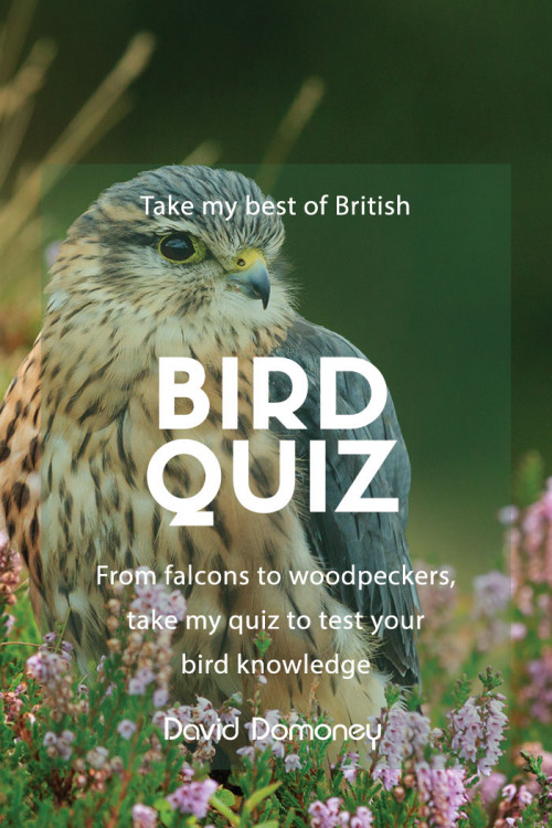 british bird quiz