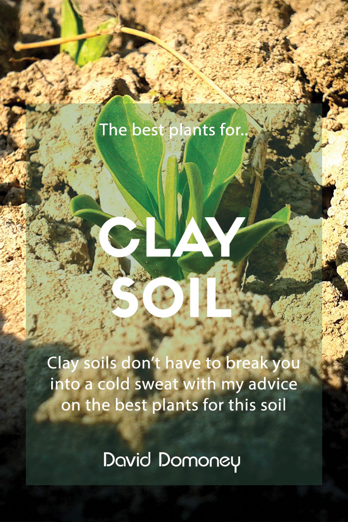 Gardening: The best plants for clay soil - Grow in full sun