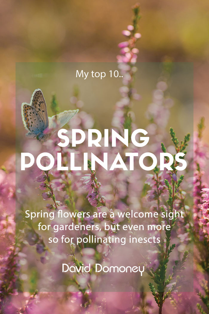 spring pollinators