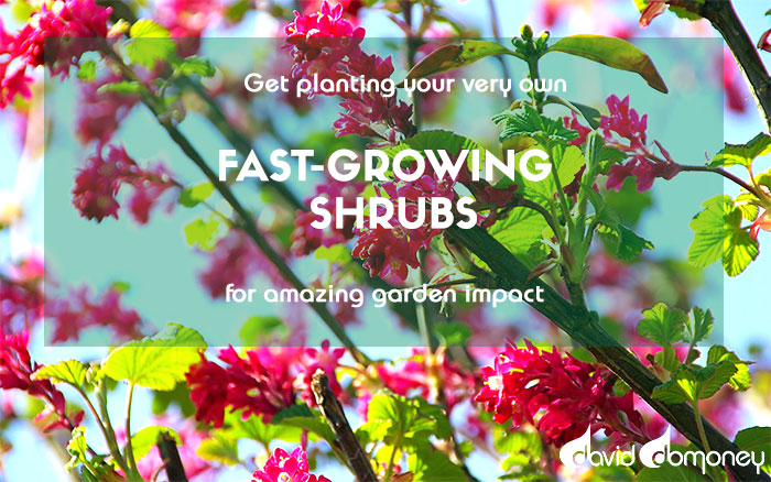 10 Best Fast Growing Shrubs For Instant Garden Impact