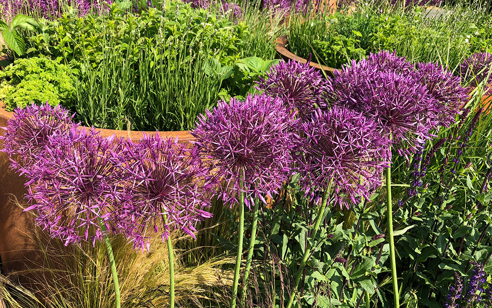 Chelsea Flower Show 2018 Plants