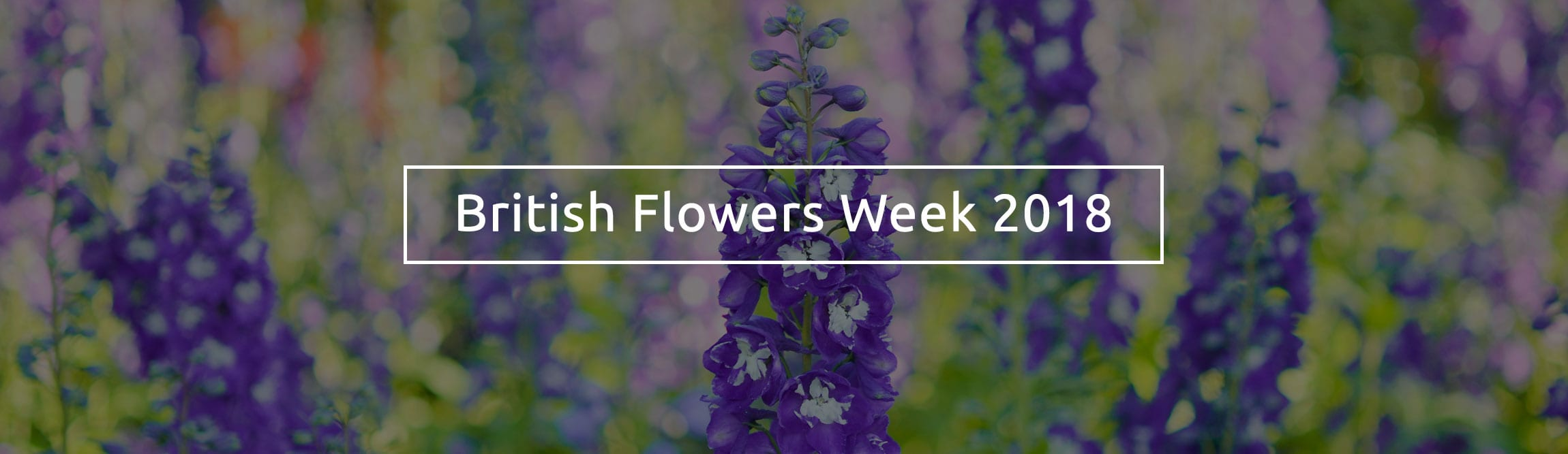 British-Flowers-week-2018