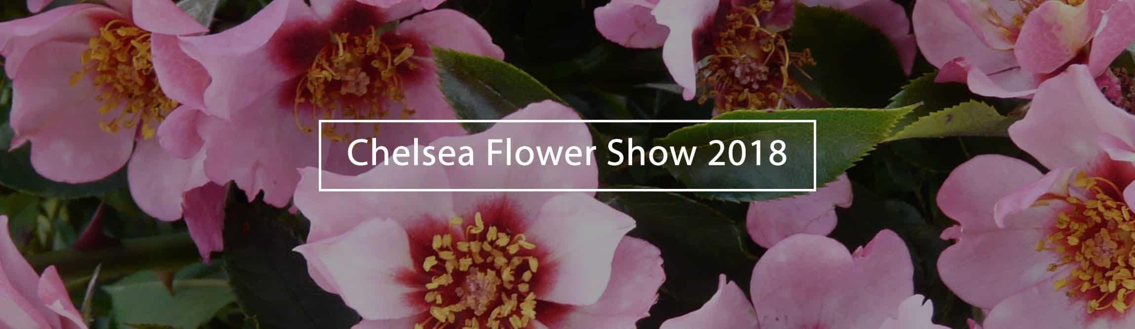 Chelsea-Flower-Show-2018