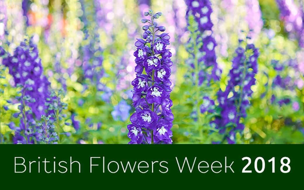 Featured-British-Flowers-EWeek