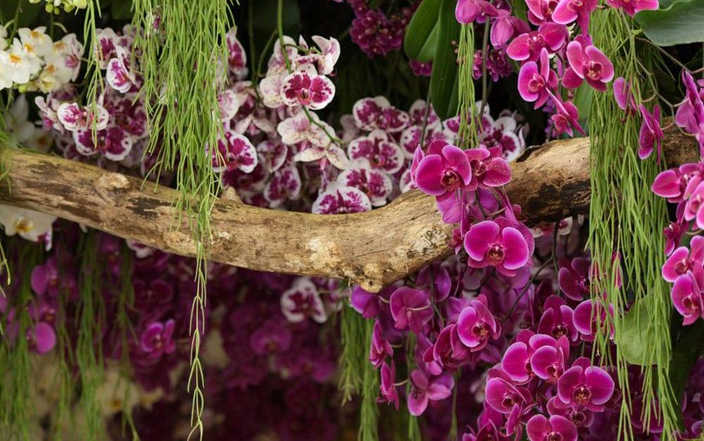 RHS-Chatsworth-Flower-Show