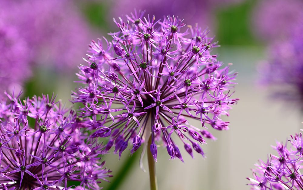alluims british flowers week