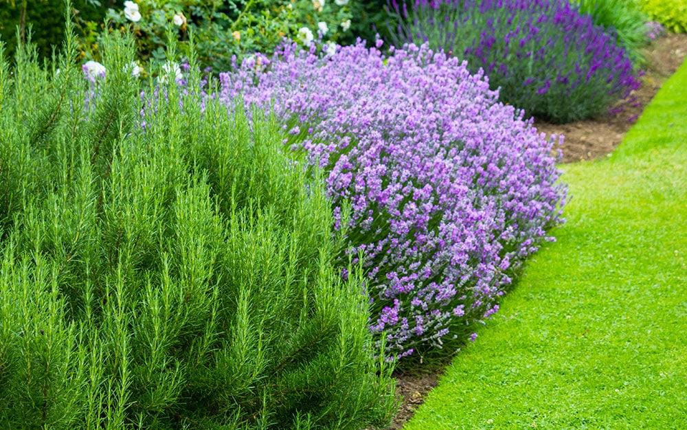 ball-tolerant-plants