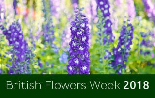 feature-image-british-flowers-week
