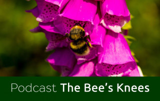 Bee-podcast-feature-image