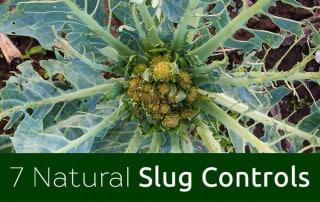 Feature-image-slug-damage