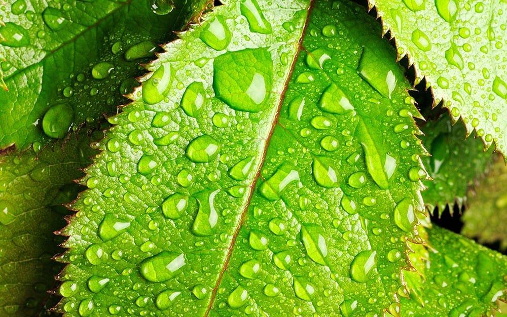 Wet-foliage