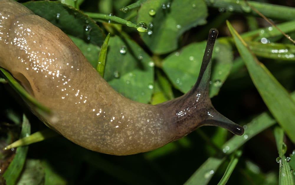 Wet-slug