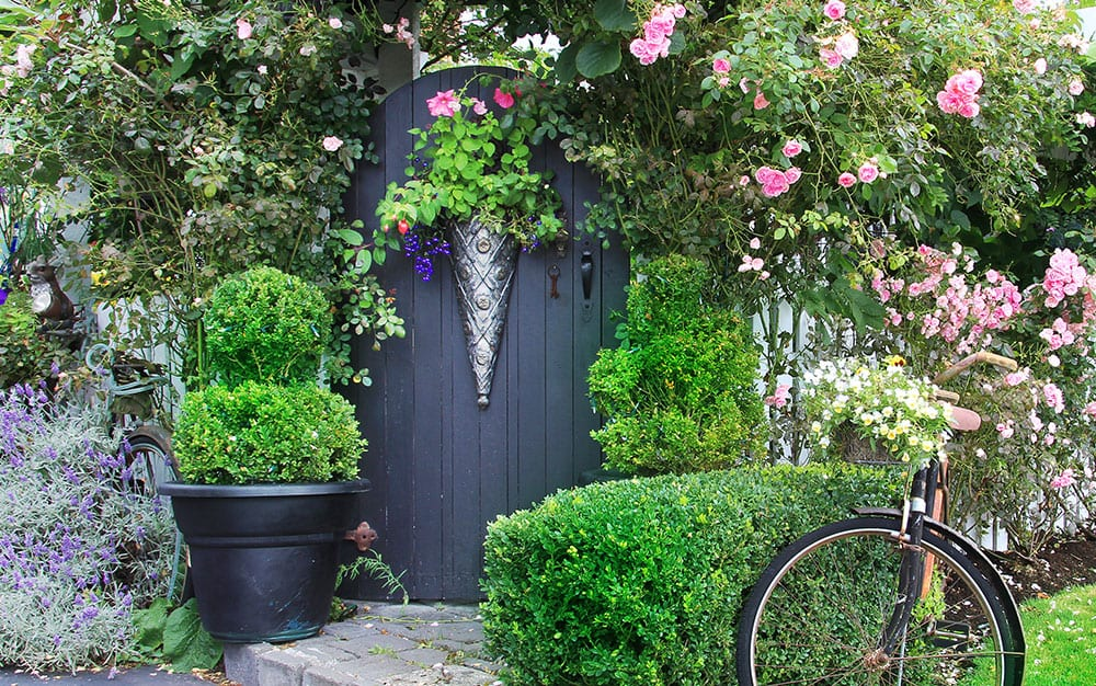 cottage garden ideas, hints & tips - david domoney