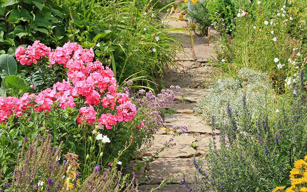 Cottage Garden Ideas Hints Tips David Domoney