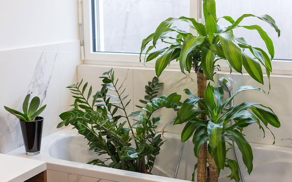 plants-in-the-bath