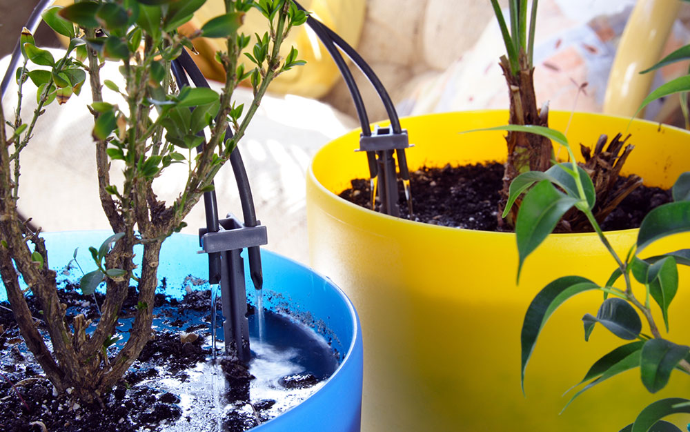 watering-system-for-containers