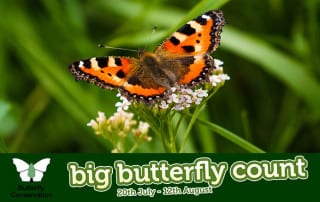 big-butterfly-count