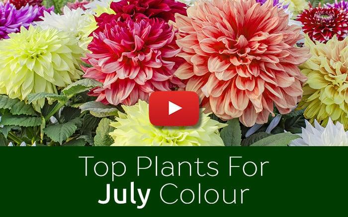David Domoney's top 6 July plants