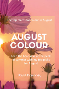 august colour
