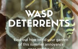 wasp deterrents