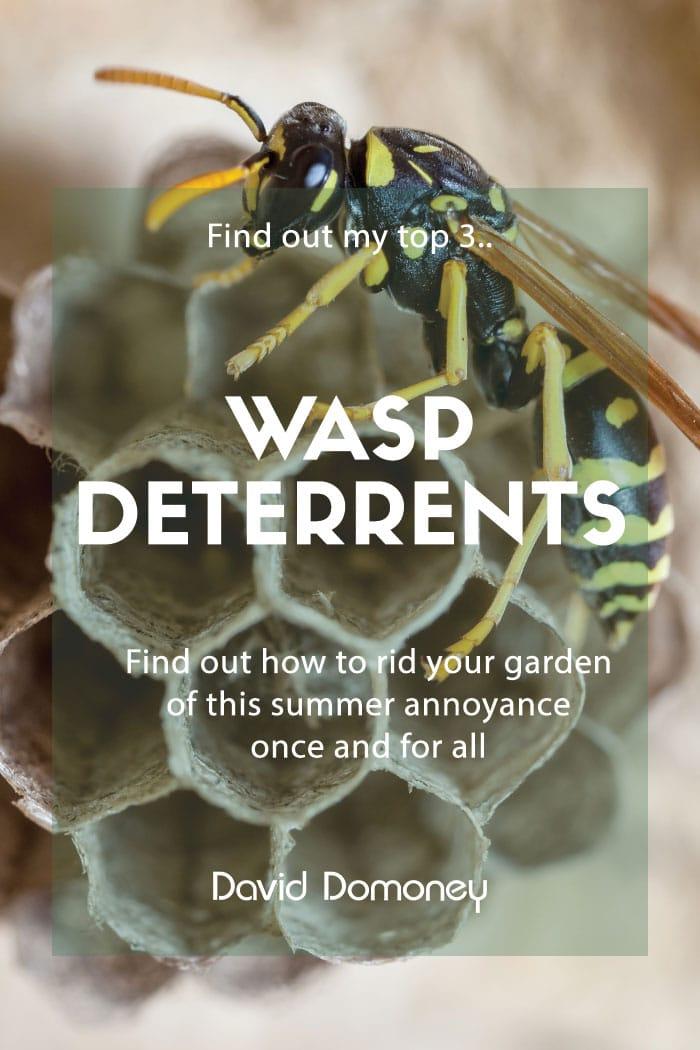 Top 3 Wasp Deterrents David Domoney Wasp Free Summer Garden