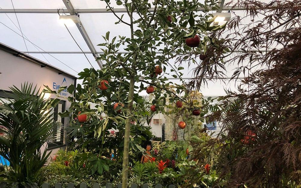 Apple-tree-Snow-White-garden-display-3