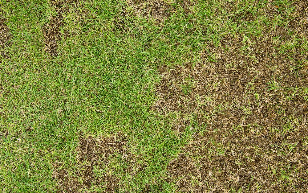 Damaged-grass
