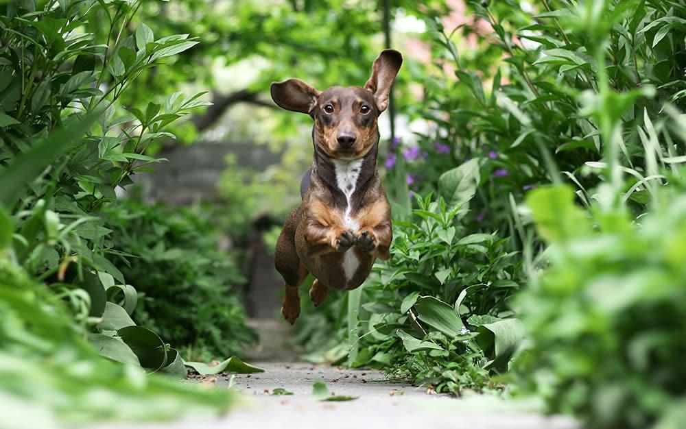 Dog-path-in-garden